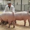 EWF Pig pairs