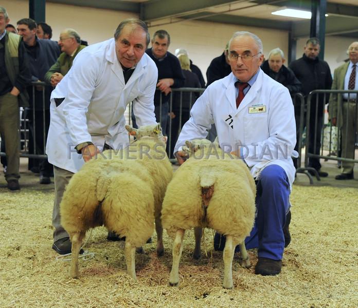 EWF Lamb pairs res