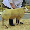 EWF single lamb