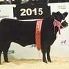 EWF Calf champion