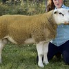 GRANTOWN SHOW 15 TEXEL AND RESERVE INTERBREED CHAMPION