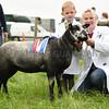 G Harwood res sheep
