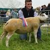G Harwood sheep champ