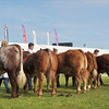 GYS beef young handlers 5497