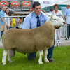 North Country Cheviot champion a ram from Messrs W and J Thompson.