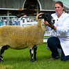 Blackface champion a ewe from R.J. and J. Raine.
