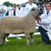 Wensleydale and Longwool champion a shearling Ram from Mr E.L. Sherwin.
