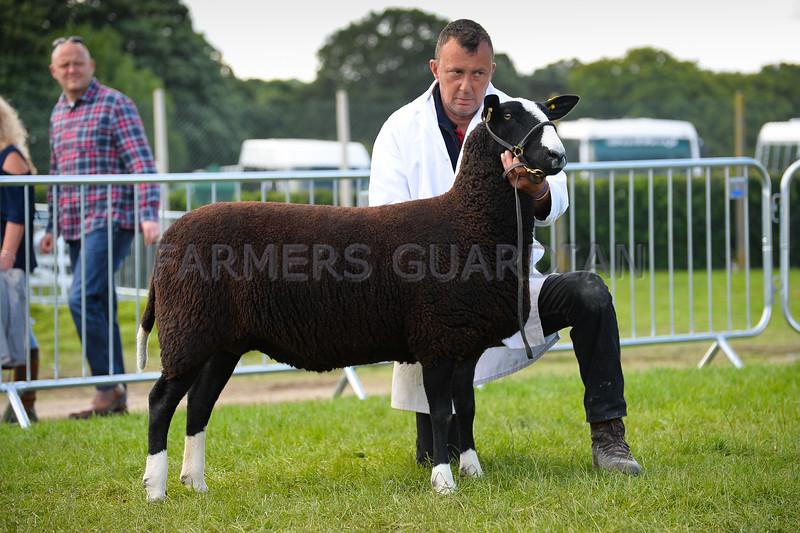 Zwartble champion a ewe from Mr Charles Scott.