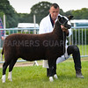Zwartble champion a ewe from Mr Charles Scott.