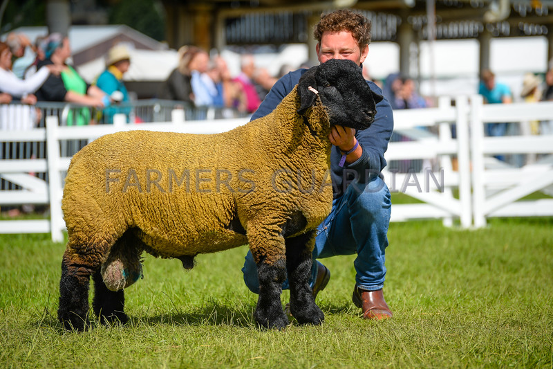 Suffolk champion a Ram lamb from Mr G.L. Riby.
