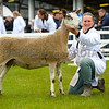Bluefaced Leicester champion an aged ewe from Miss C.J. Ward.