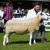 Lleyn champion a ewe from Messrs T and I Walling.