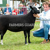 Zwartble champion a ewe from Mr N Millar.
