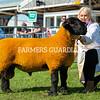 Suffolk champion a Ram from Hiddleston family