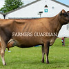 Guernsey champion Coldeaton Tequila Alison, Coldeaton Jerseys