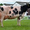 Holstein Champion Newbirks Caviar Susan 112, A. Lawson and Son