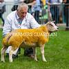 Beltex champion a ram lamb from Mr A. Jackson.