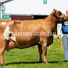 Ayrshire champion Hilltower Modern Marcy, A. S. Lawrie