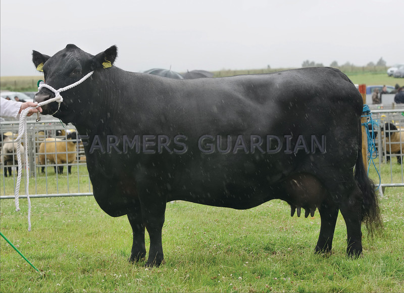 Aberdeen Angus champion at Kirriemuir Show from Alan Rennie, Mosston Muir, Forfar