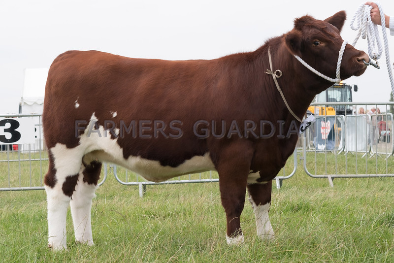 Leicestershire County Show 2016<br /> AOB Native Champion <br /> Picture Tim Scrivener 07850 303986<br /> ….covering agriculture in the UK….