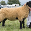 Leicestershire County Show 2016<br /> Picture Tim Scrivener 07850 303986<br /> ….covering agriculture in the UK….