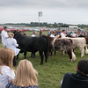 Leicestershire County Show 2016<br /> Judging <br /> Picture Tim Scrivener 07850 303986<br /> ….covering agriculture in the UK….