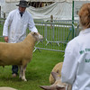 Lincoln Show082