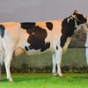 L Event Holstein champ