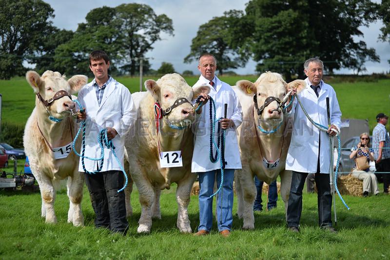 Group of three beef champions Charolais from Gareth Jones, Cwmtirmynach, Bala. Handlers left to right Roj Davies, Gareth Jones and Dei Williams.
