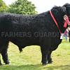 Welsh Black champion Gregoir Berwyn from Carwyn Lewis, Llanybdderer.