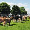 Norfolk Dairy Groups