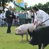 Norfolk Pig judge 2