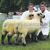Norfolk Sheep Pair