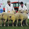 Notts sheep group