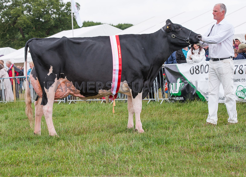 The interbreed dairy champion, Holstein Helton Goldwyn Clarisa from Heler Farms and Wardle Holsteons of Audlem, Cheshire.