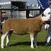 N&Notts sheep res