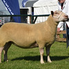N&Notts sheep champ