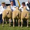 N&Notts Sheep group