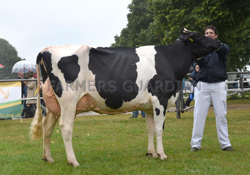 Norfolk Holstein