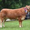 Norfolk Limousin