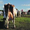 Northumbs Dairy line