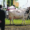 Northumbs Dairy judge