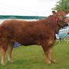 Northumbs Beef champ