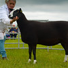 Reserve inter-breed sheep a Zwartble ewe from Colin Rae.