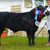 Reserve Commercial champion Moofasa from Marwood and Wilkinson.