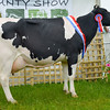 Dairy inter-breed champion senior cow in milk Chishillways Ross Petrina 95 from R and C.A. Harrison.