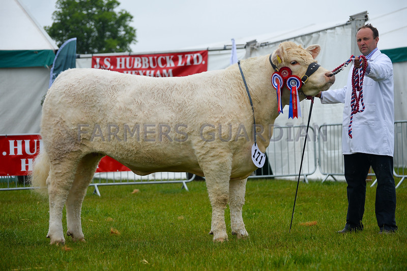 Inter-breed reserve and Charolais champion Tweedale Lady from J Watson and Co.