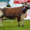 Longhorn champion Fishwick Omega from John Close and Son Ltd.