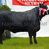 Aberdeen Angus champion Linton Gilbertines Rosebud Willabar from Gordon Brooke Estate.