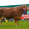 Inter-breed Beef champion Whinfell Park Glittered from Messrs Jenkinson.